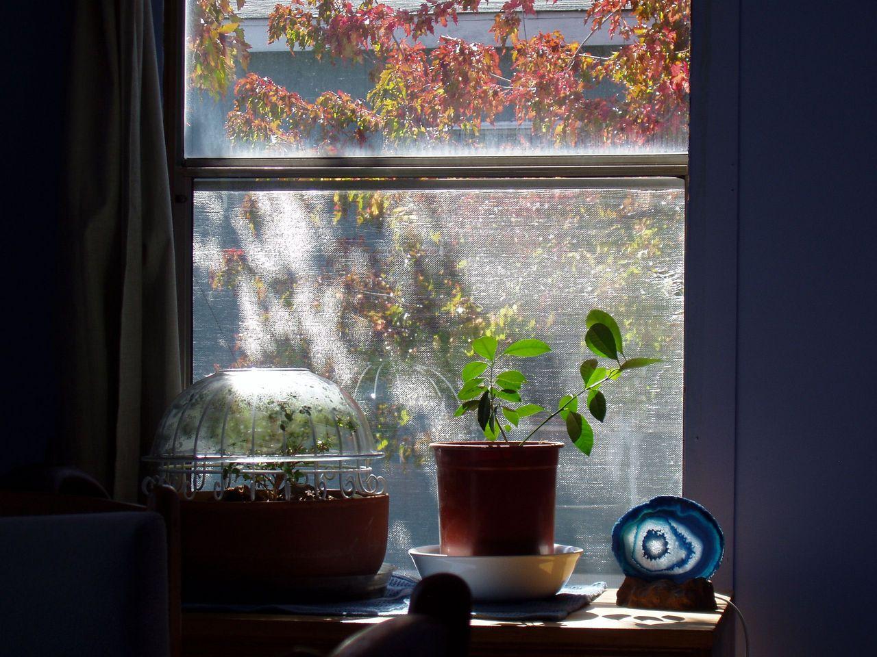 2560x1920 image for Sunlight windows